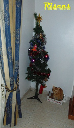 cattree.JPG