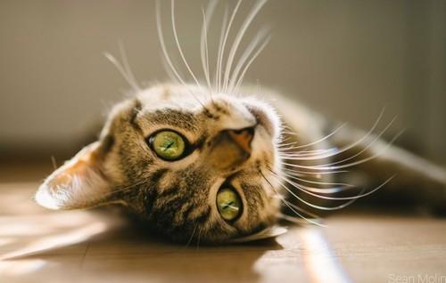 incriveis-bigodes-gatos.jpg