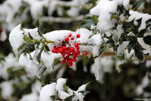 Inverno 2015HS221A.jpg