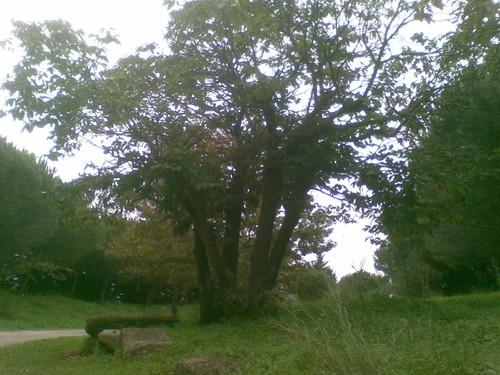 castanheiro parque  Out 14. Foto original de F.M.C.L.jpg
