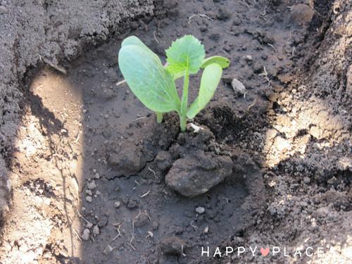 Agricultura1.3.jpg