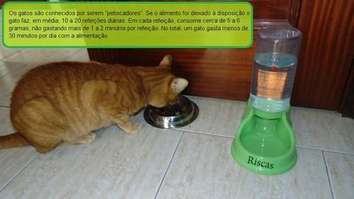 Gatos-petiscadores.JPG