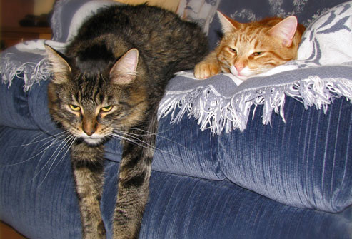 getty_rf_photo_of_cats_on_sofa.jpg