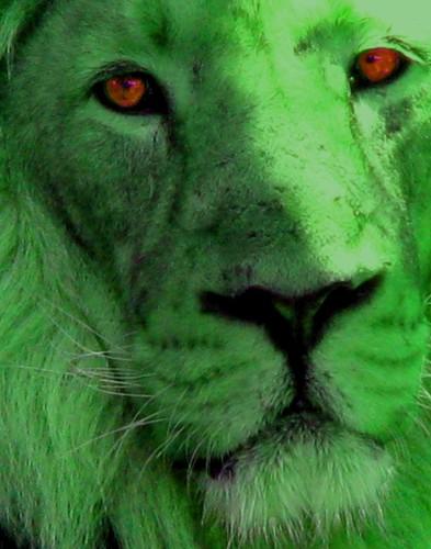 green-lion[1].jpg