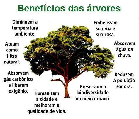 Dia mundial da rvore 21 de mar o associacaopaispalmeira for Porque son importantes los arboles wikipedia