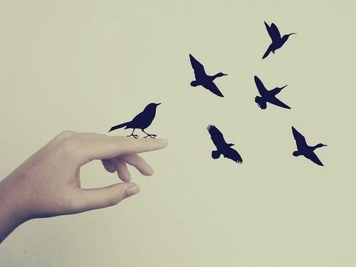 http://pixgood.com/birds-silhouette-tumblr.html