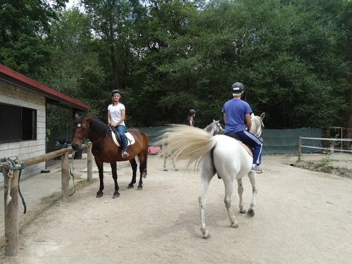 cavalos 7.JPG