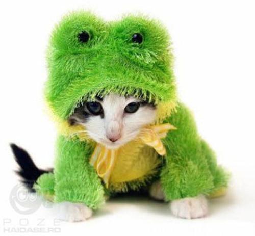 gatos-fantasiados-2.jpg