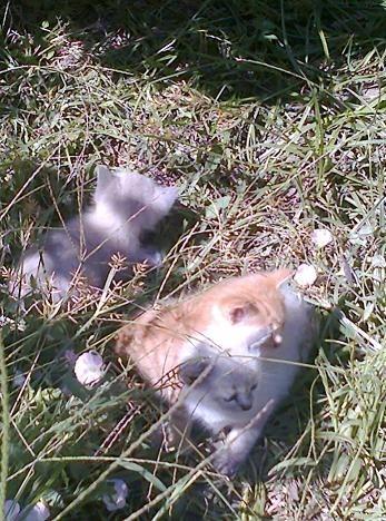 gatos-em-quintal-materno_VC-Agosto 2013_2.jpg