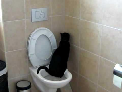 gato wc.jpg