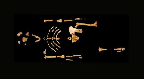 Fóssil Lucy