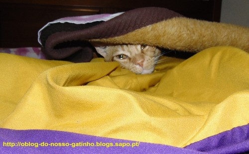 gatocamuflado023.JPG