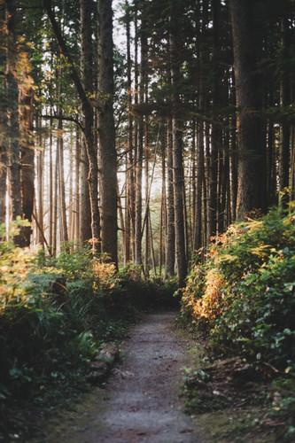 caminho2.jpg