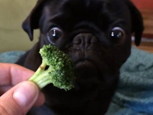 bróculo.jpg
