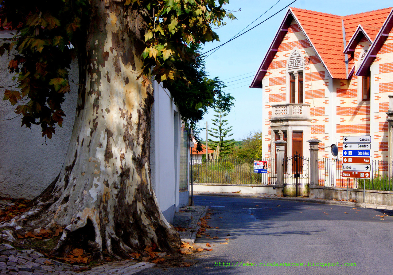 ArvoresColares16102015blog.jpg