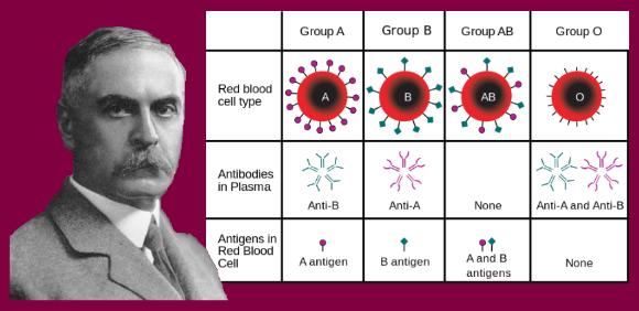 karl landsteiner grupos sangue.png