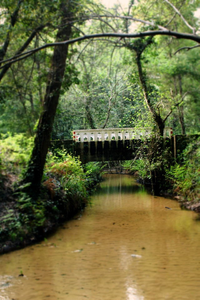 Ponte do Amor.jpg