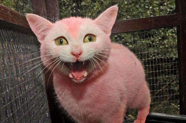 pink-cat-pic-solent-image-1-701231935.jpg