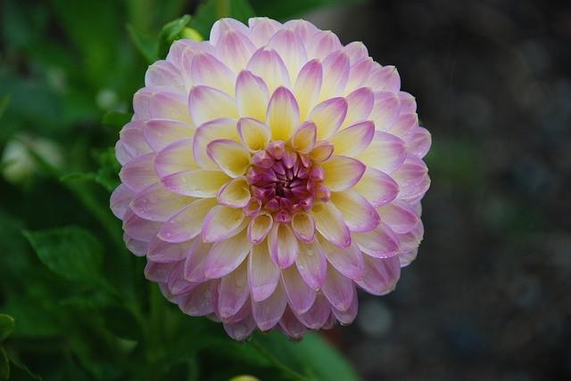flower-22669_640.jpg