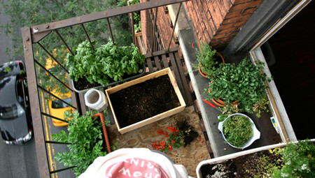 como-fazer-uma-horta-organica-em-casa-3.jpg