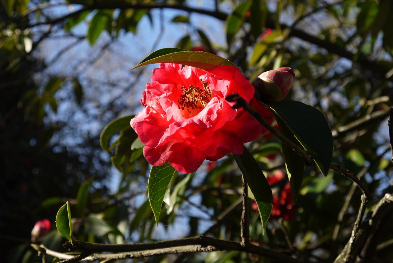 Jardim Botânico11.JPG