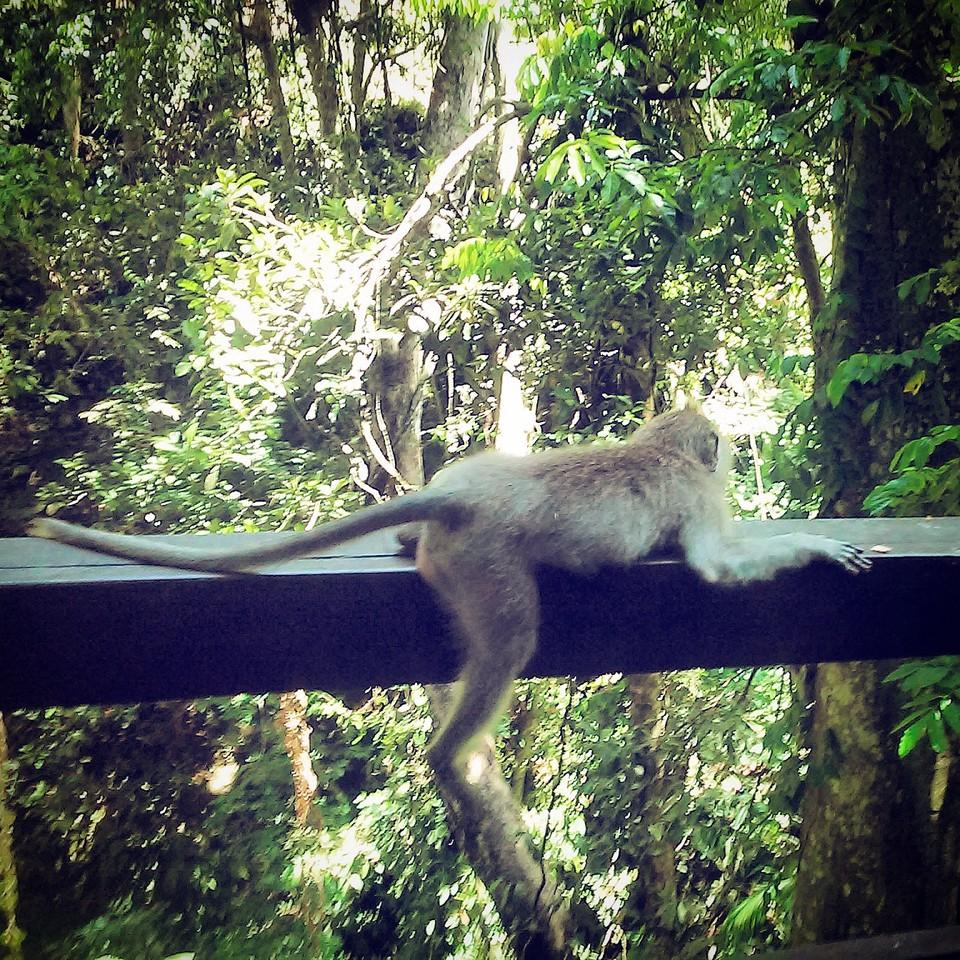 floresta_macacos_bali.jpg