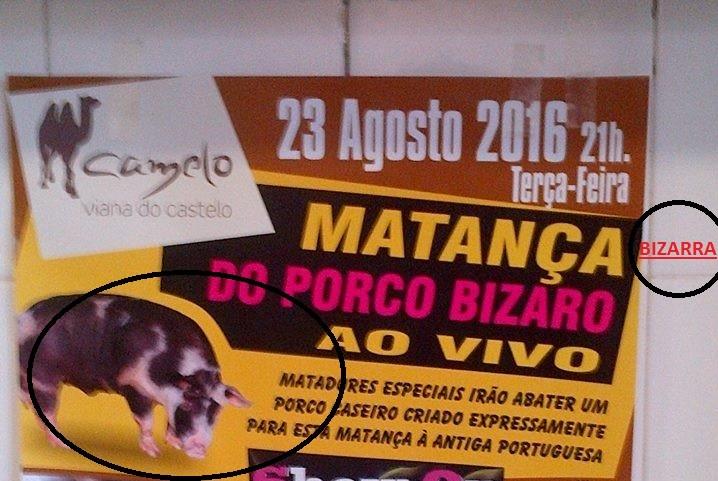MATANÇA DE PORCO XXX.jpg