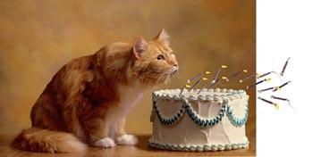 Dia Mundial Gatos.jpg
