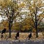Participantes em monociclos, Praga, República Che