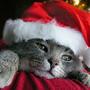 Animals-Sing-12-Days-of-Christmas-by-Klaatu42.jpg