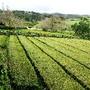 Açores_São_Miguel_208.jpg
