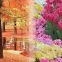 outono e primavera.jpg