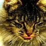 O gato nunca é comum