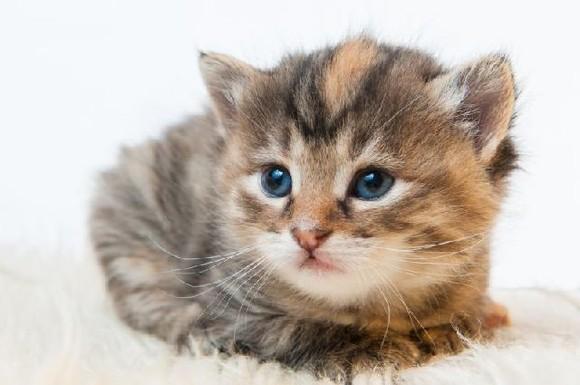gato-fofo