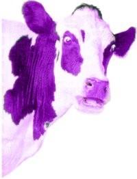 purplecow.jpg