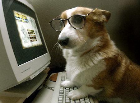 dogPC.jpg