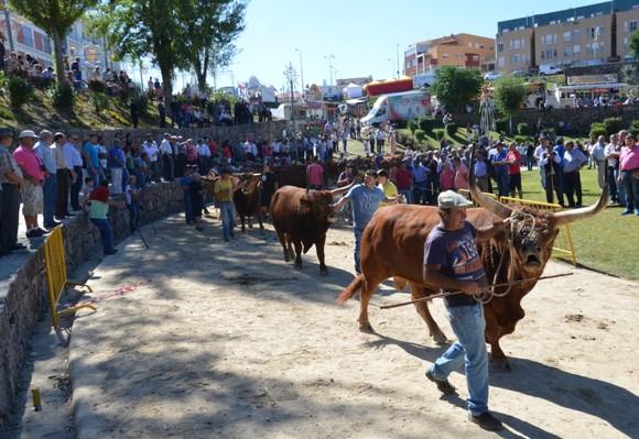 Concurso Pecuário - desfile