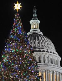Árvores de Natal no Mundo