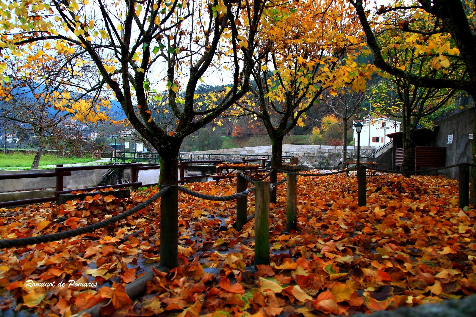 Outono em Pomares I (2)