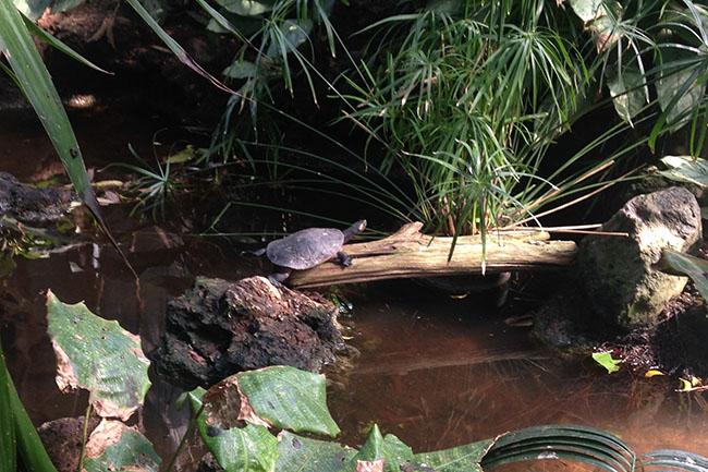 Schildkröten_02.jpg