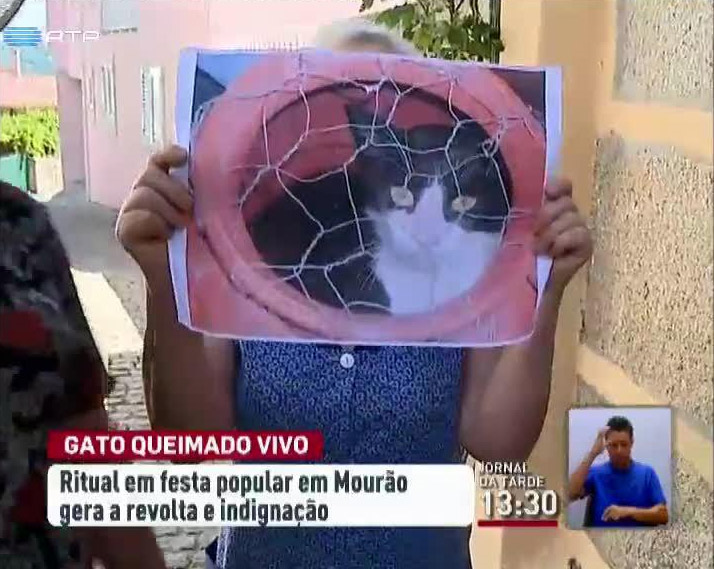 QUEIMA DO GATO.png