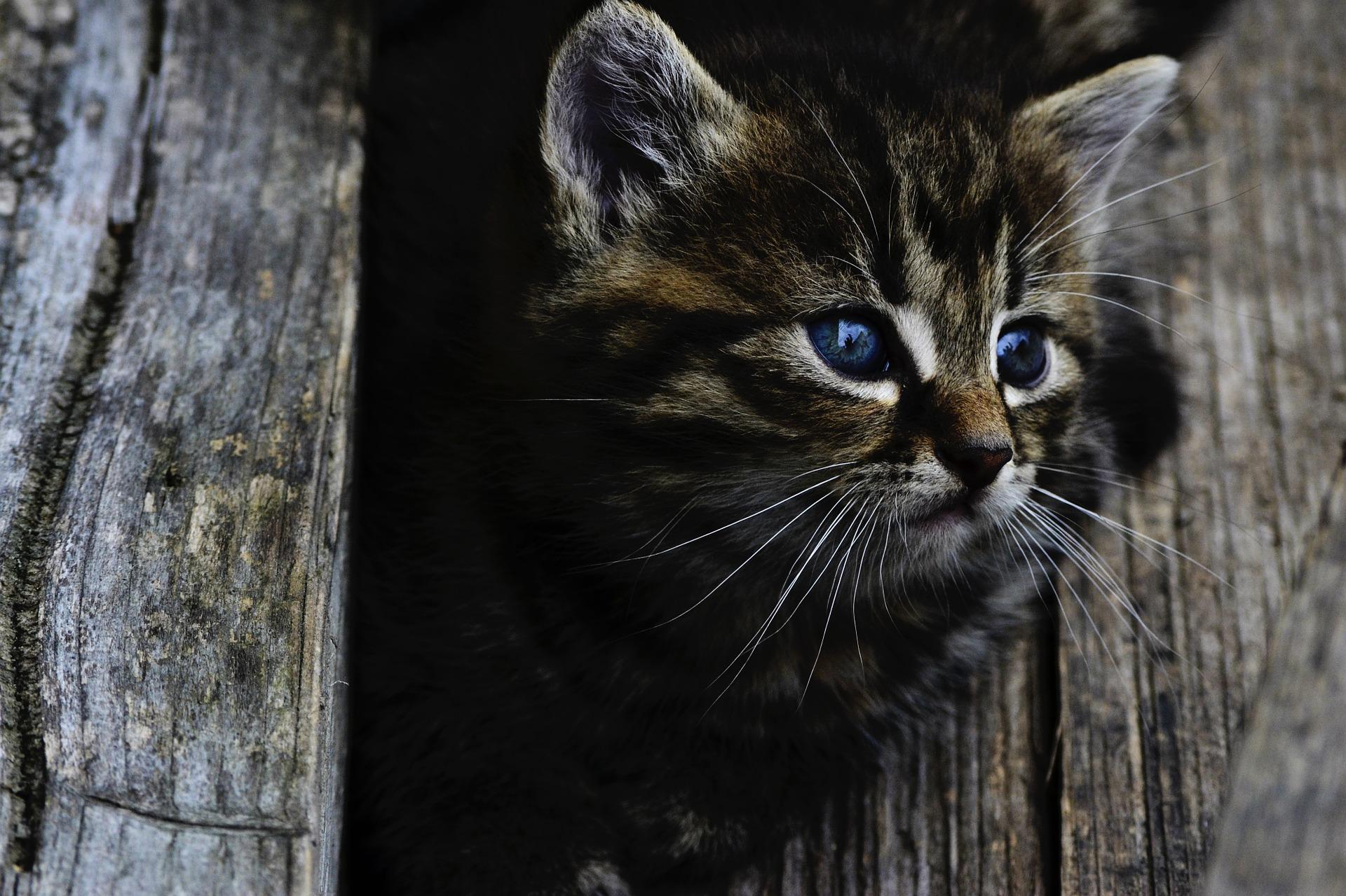 cat-914110_1920.jpg