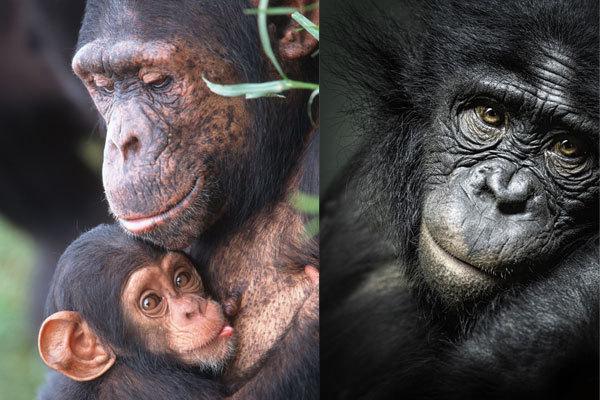 chimpanze-3852.jpg