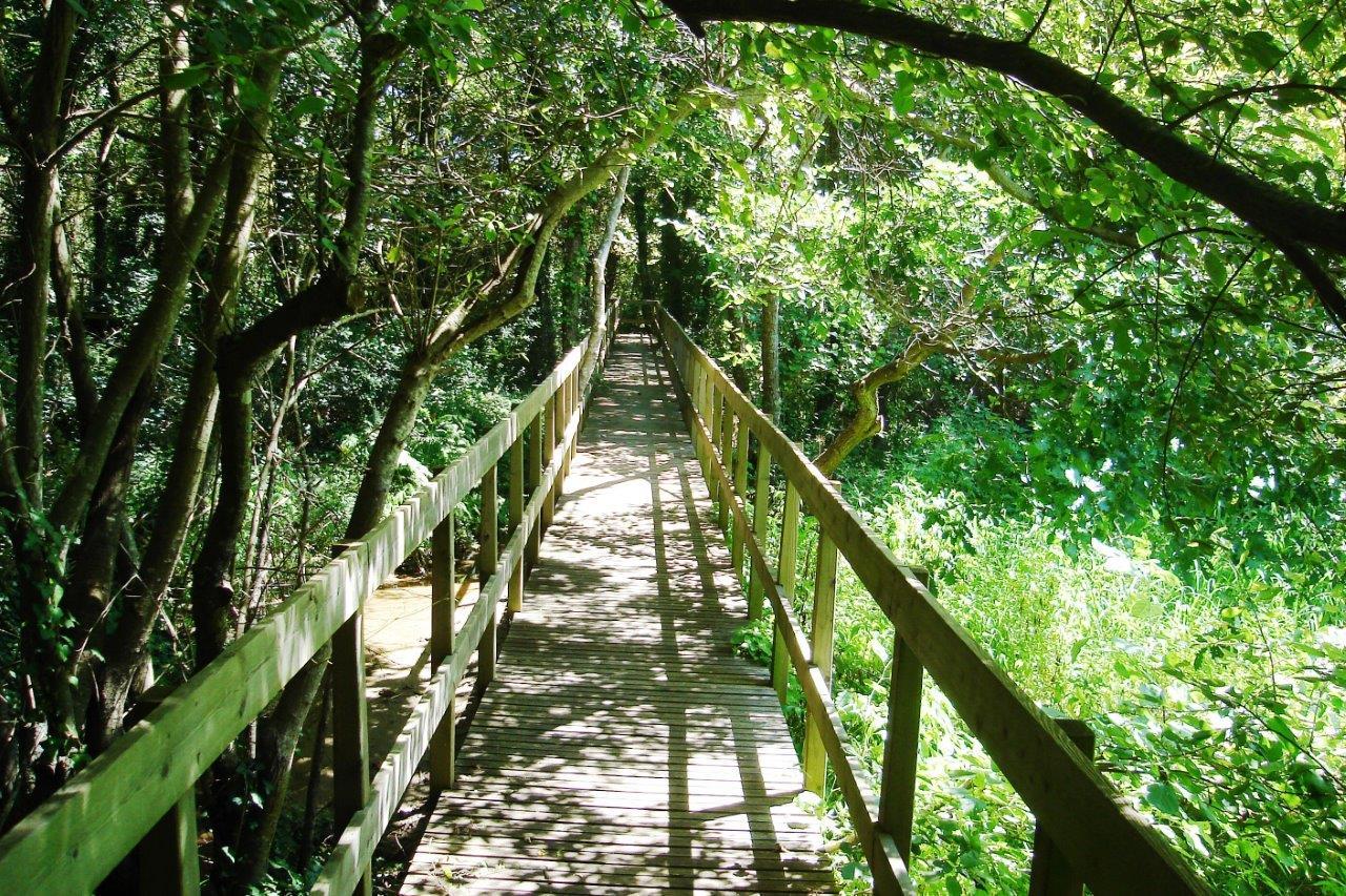 Lagoa de Bertiandos (Ponte de Lima).jpg