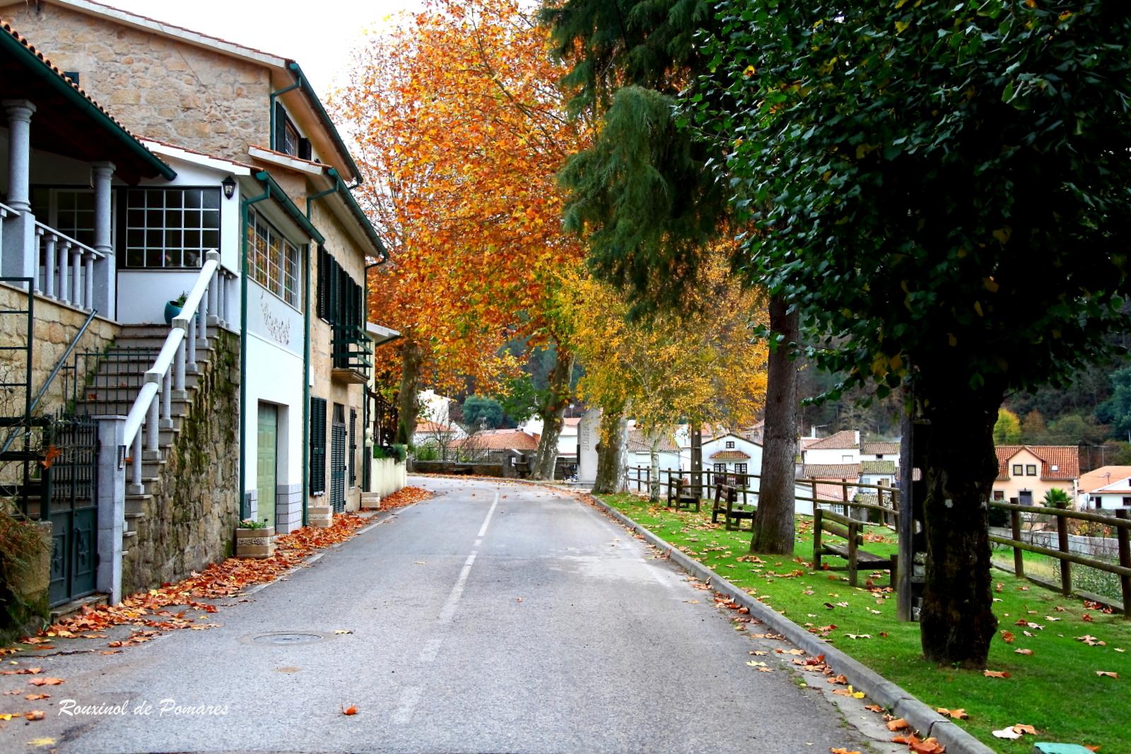 Outono em Pomares IV (2)